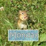 chipmunk schedule pic monday